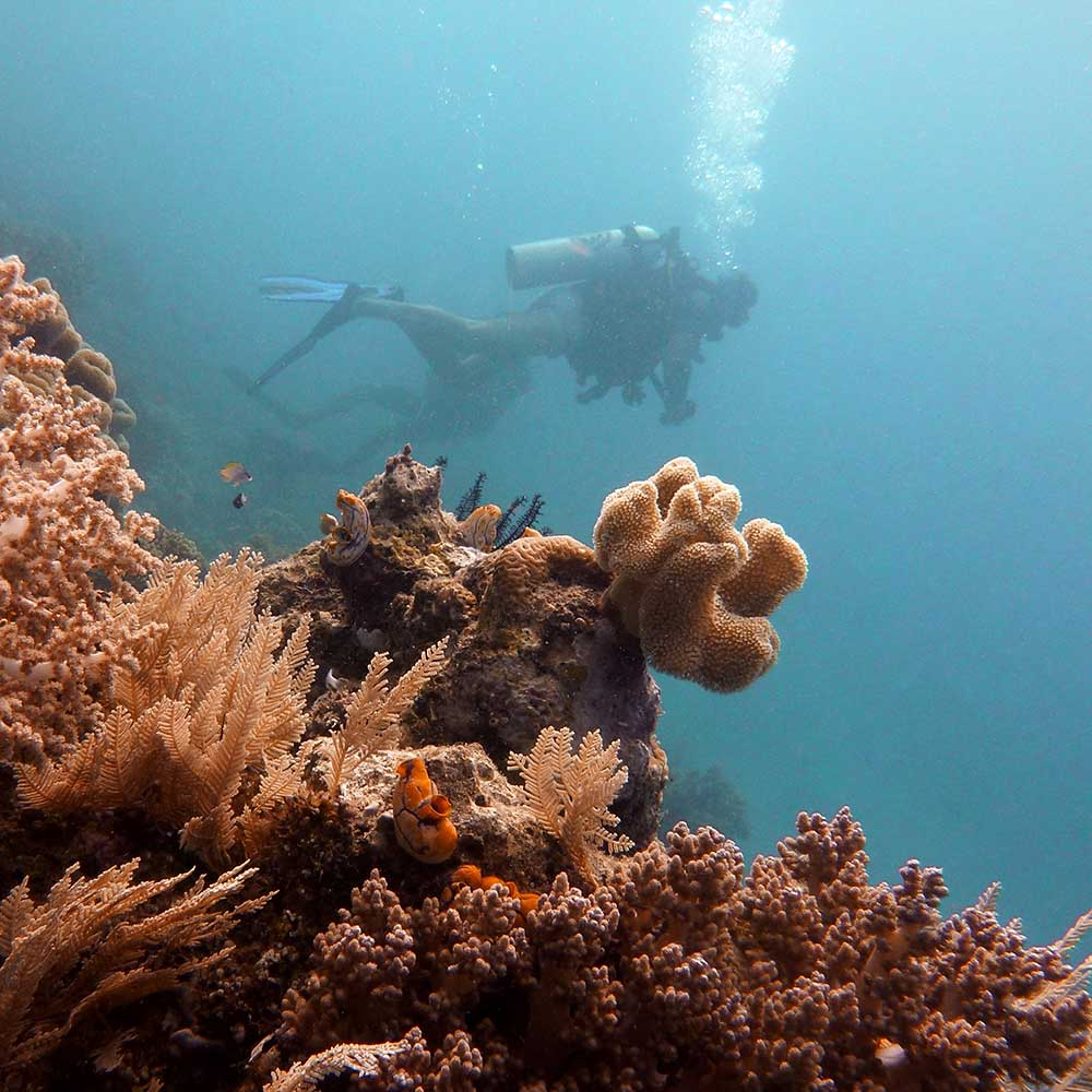 Dive Courses - Morotai, North Halmahera