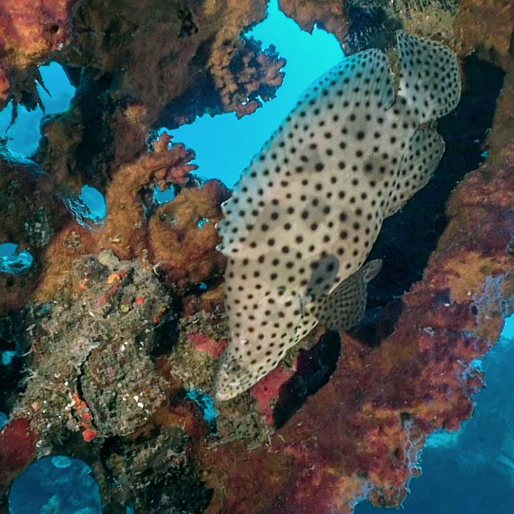 Diving Morotai - North Halmahera